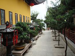 Bonzai dans le jardin d'un temple