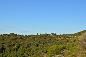 La végétation du Luberon